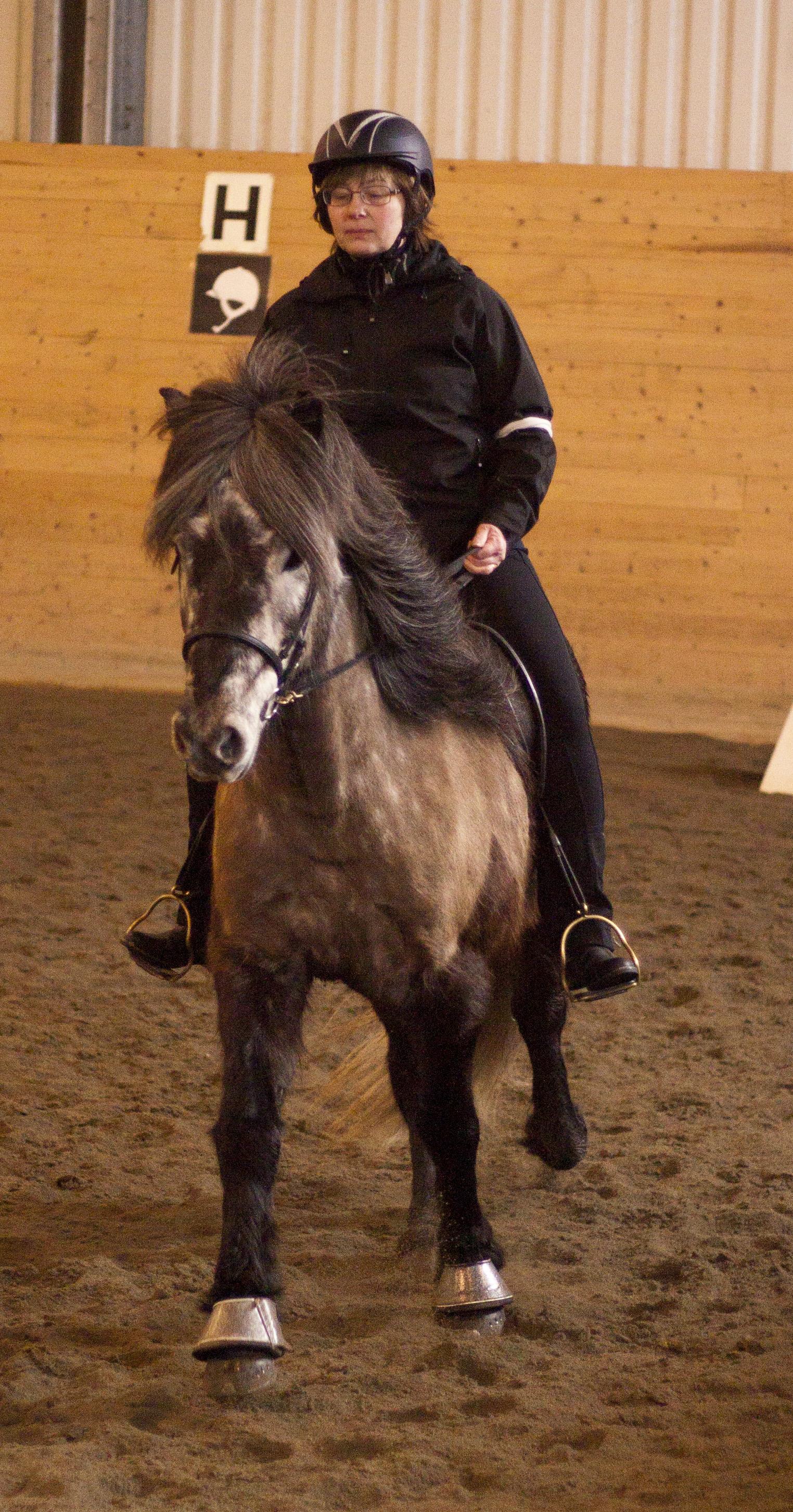 Islandshästtävling i Ånge 19 Mars. Foto: Ida Roim