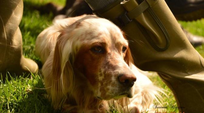 Hundens dag 2015-05-14 på Västra Medelpads brukshundsklubb. Foto Susanne Almgren
